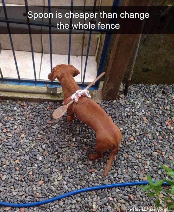 funny tied spoon around small dog so he couldn't get out of the fence clever and cheaper than changing the fence