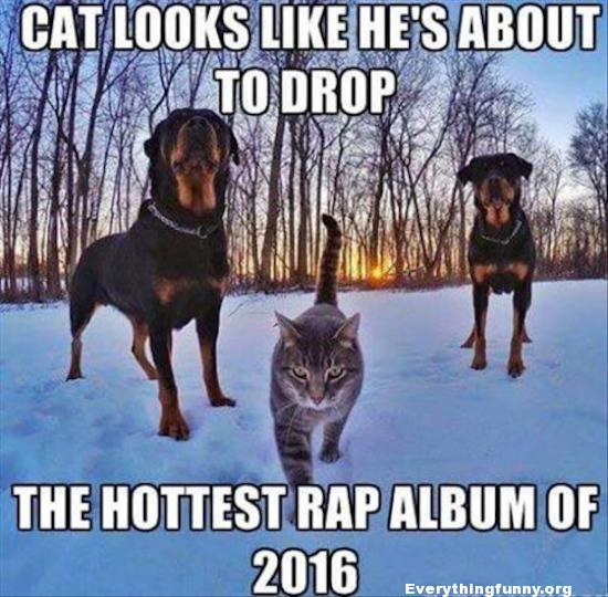 funny caption cat looks like he's about to drop the hottest rap album of 2016