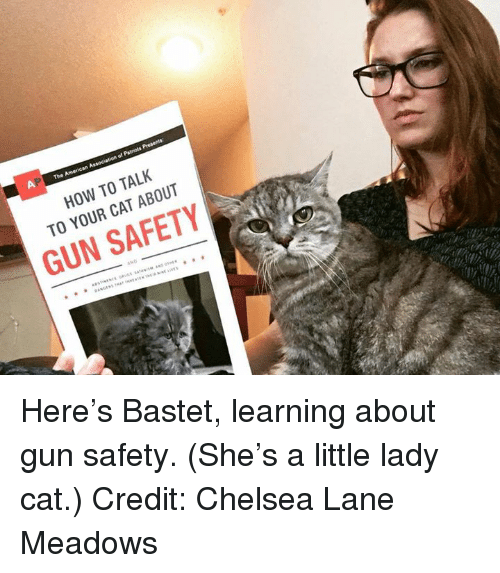 funny photo funny cat caption how to talk to your cat about gun safety