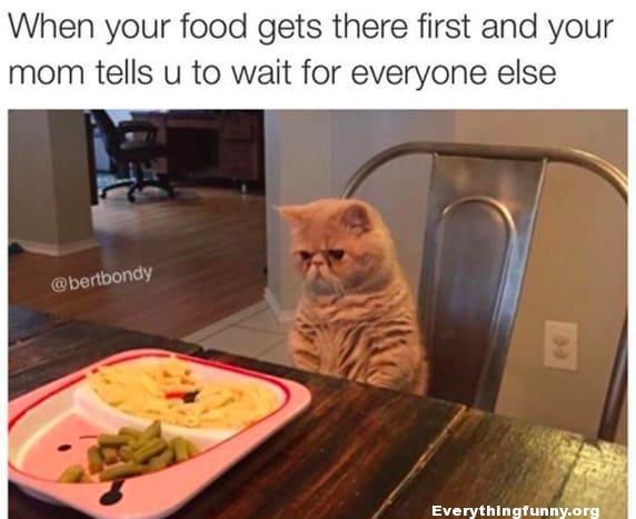funny caption, when your food gets there first and your mom tell u to wait for everyone else funny cat picture