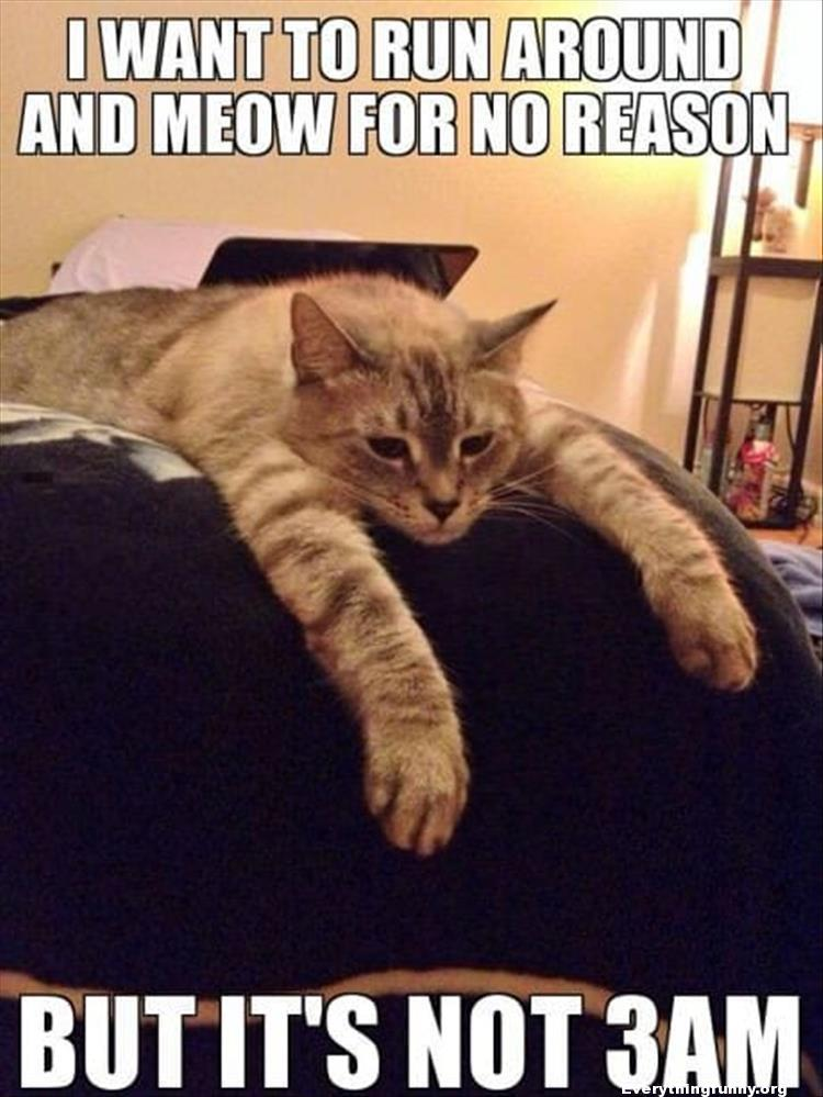funny caption funny meme funny cat i want to run around the house and meow for now reason but it's not 3 am