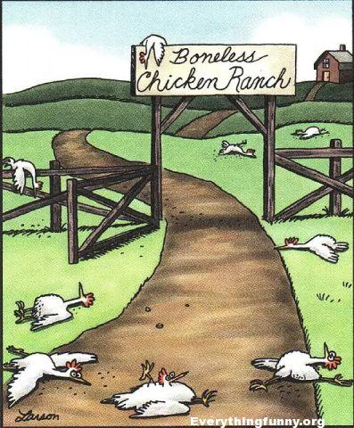 funny cartoon, funny farside cartoon, boneless chicken ranch - chicken lying all over the place