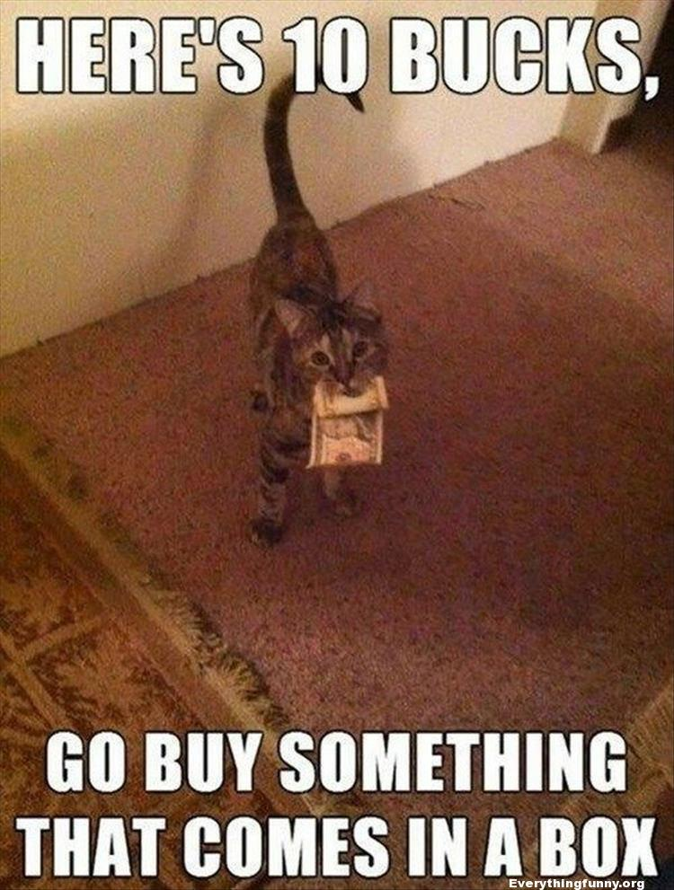 funny cat holds money in his mouth here's 10 bucks, go buy something that comes in a box