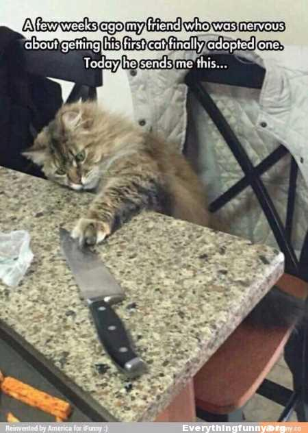 funny cat caption few weeks ago friend was nervous about getting his first cat finally adopted one today he sends me picture of cat going for huge butcher knife on table