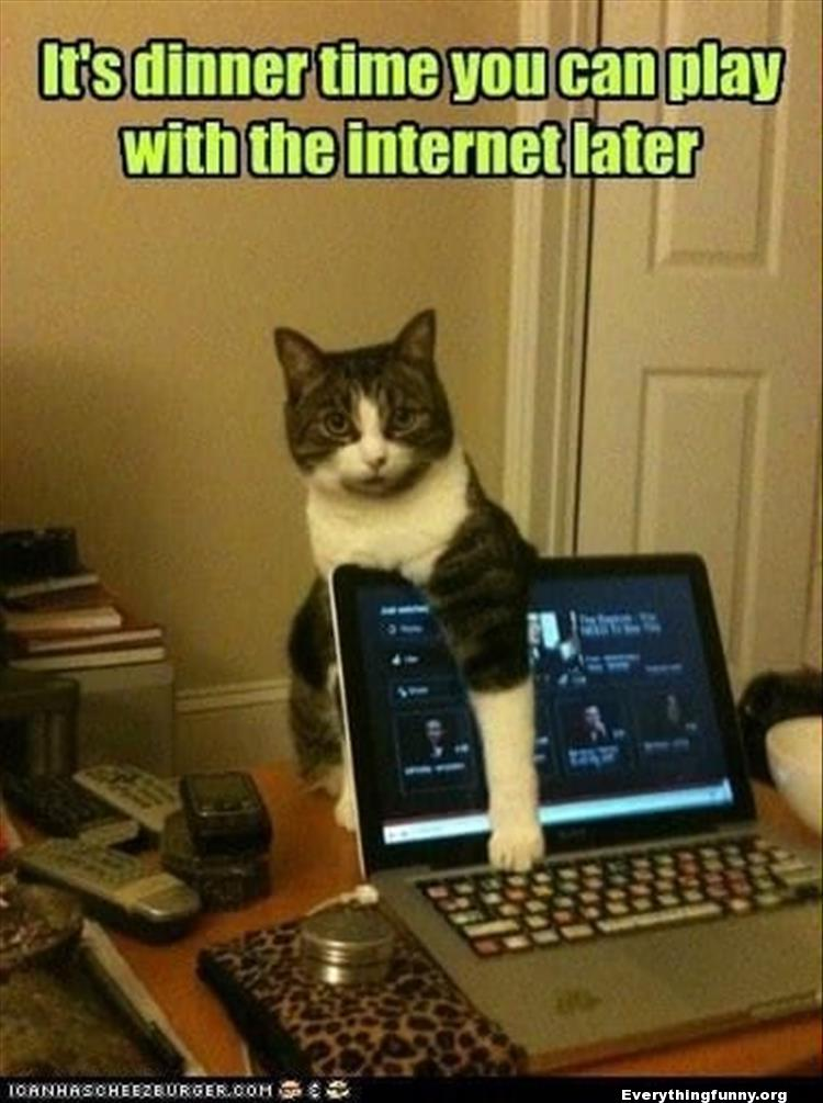 funny cat caption cat wants to eat covers computer screen with paw it's dinner time you can play with the internet later