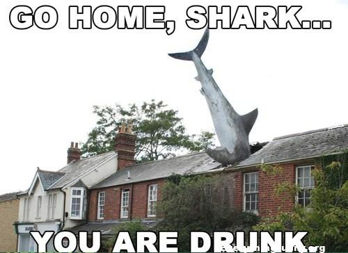 funny go home shark you are drunk, go home you are drunk photos, funny go home you are drunk, shrak in top of roof of house