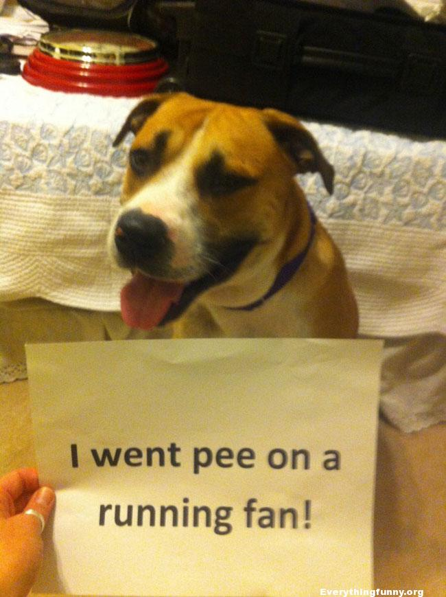funny caption funny dog shaming i went pee on a running fan