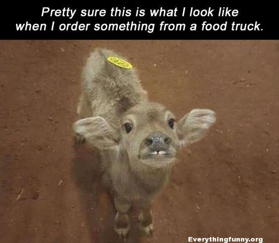 funny caption pretty sure this is what i look like when i order something form the food truck