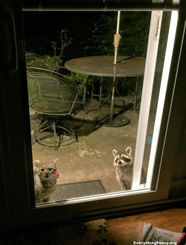 funny caption cat and raccoon at back door funny picture