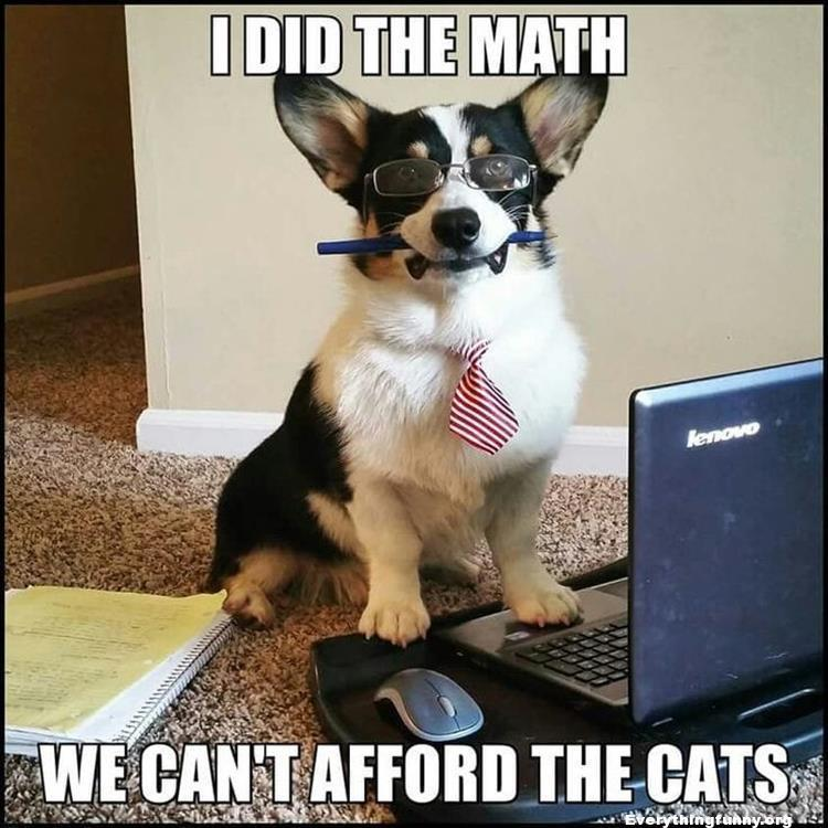 funny captions funny dog picture i did the math we can't afford the cats