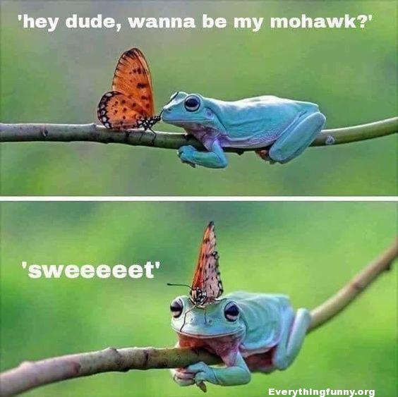 funny caption blue frog hey dude wanna be my mohawk to butterfly butterfly land on frogs head
