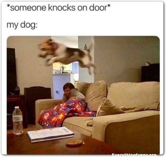 funny caption post someone knocks on door my dog goes flying