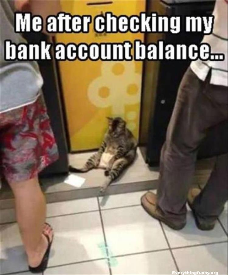 funny caption me after checking my bank account balance depressed cat in front of atm machine