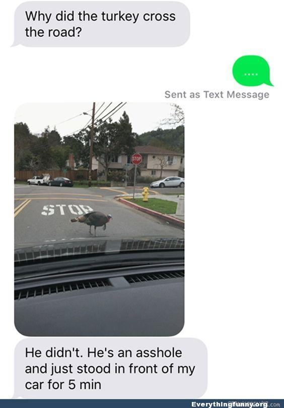 funny text message why did the turkey cross the road why? he didn't he's an asshole and just stood in front of my car for 5 minutes