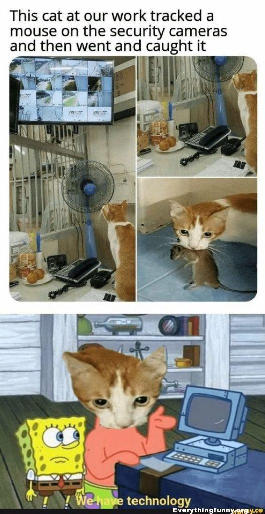 funny cat caption cat tracks mouse on security camera and then went and caught it