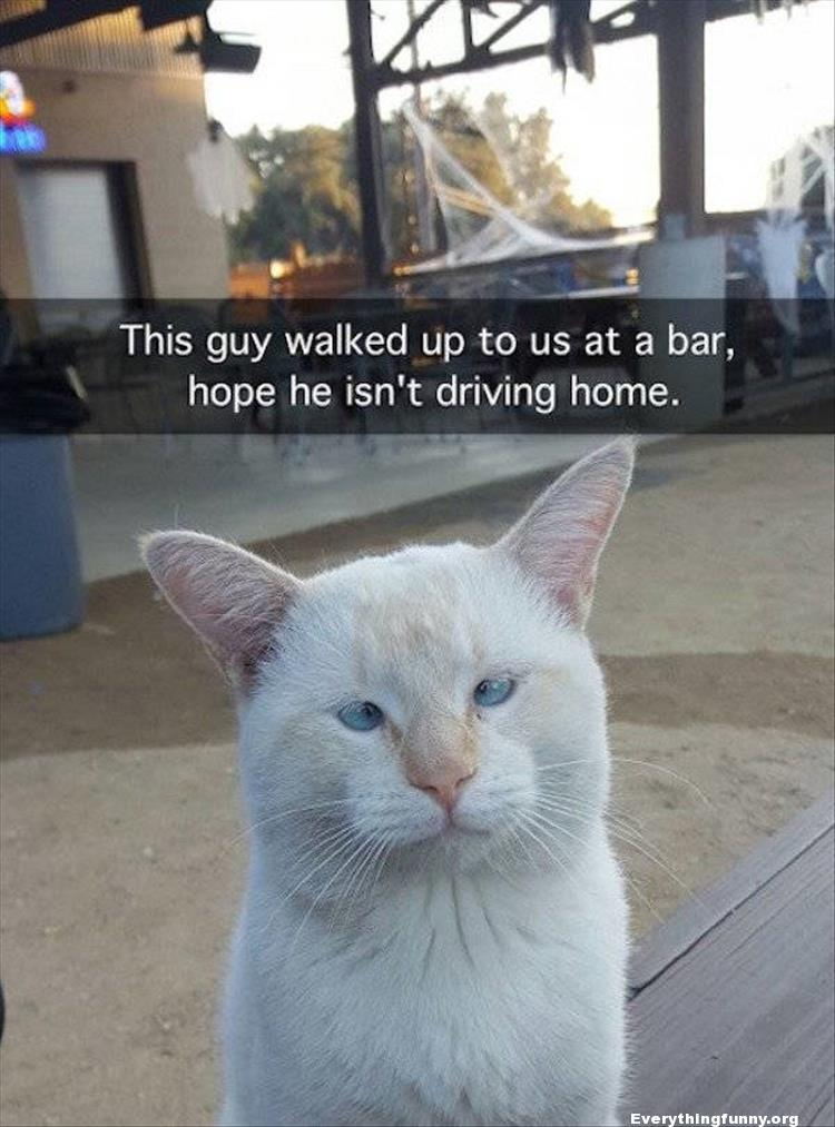 funny cat picture cross eyed cat looks drunk hope he isn't driving home