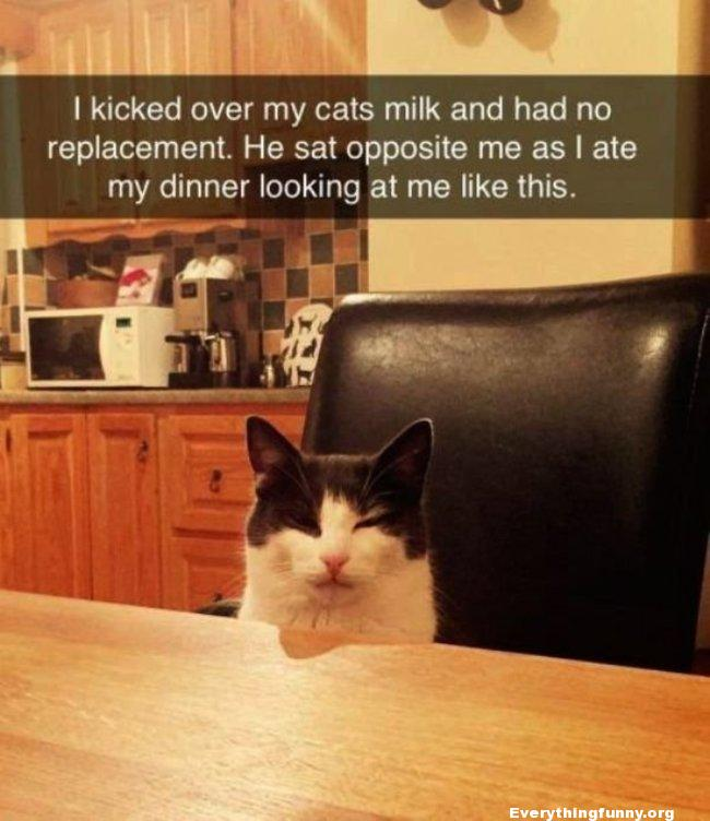 funny caption funny cat picture i knocked over my cats milk and had no replacement so he sat opposite me as I ate my dinner looking at me like this