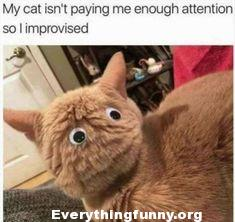 funny caption, funny post, funny cat photo, my cat isn't paying me enough attention so I improvised put googly eyes on back of head