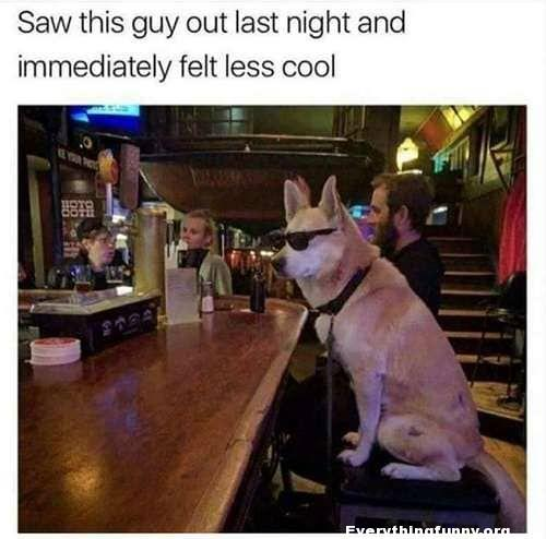 funny captions awesome dog picture dog sitting at bar with sunglasses on saw this guy out last night and immediately felt less cool