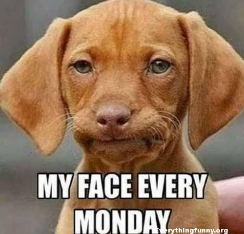 funny disappointed dog meme smirking dog meme, my face every monday