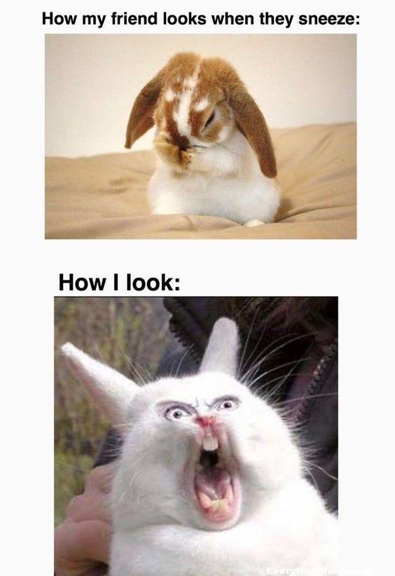 funny captions funny animal funny memes how my friend looks when they sneeze how i look