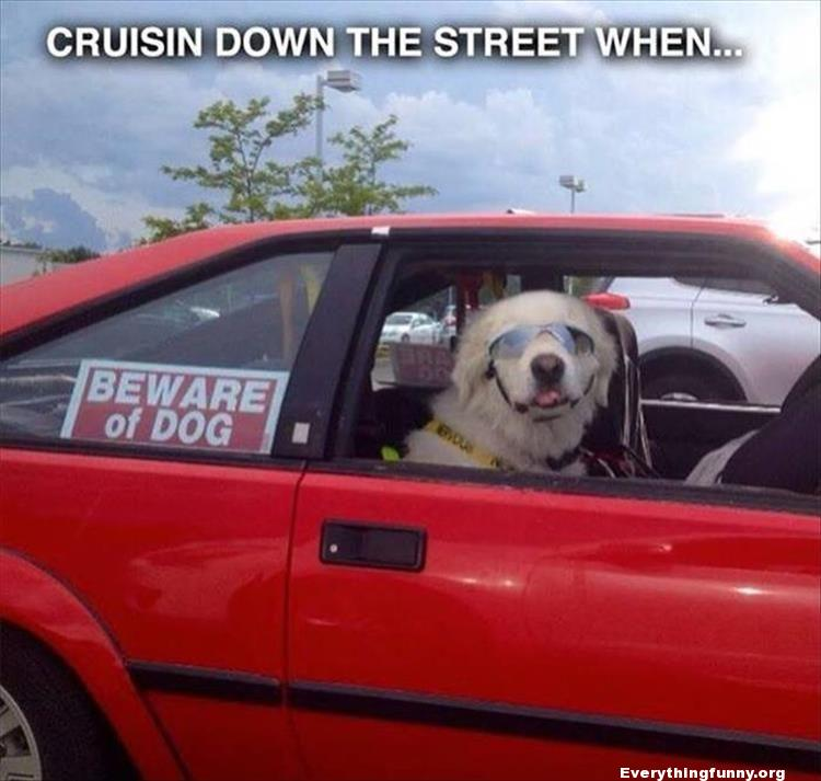 funny beware of dog sign and happy dog with sunglasses in car
