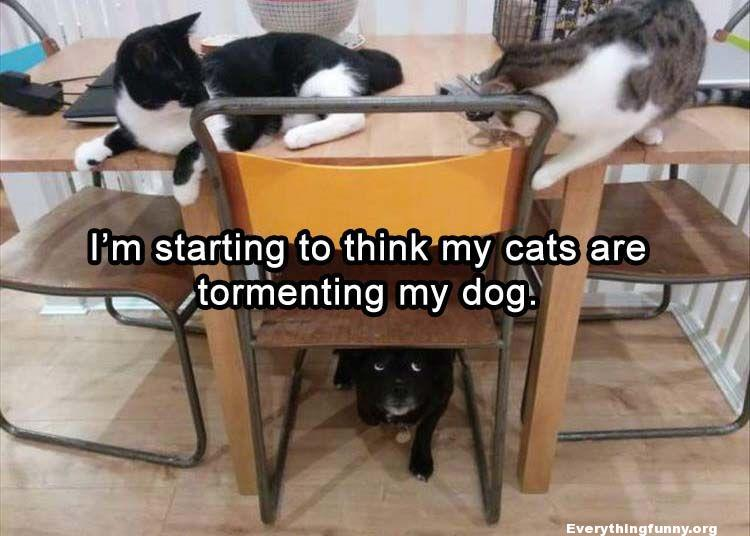 funny cats tormenting dog under the table - funny cats, funny memes, funny animals, funny captions,