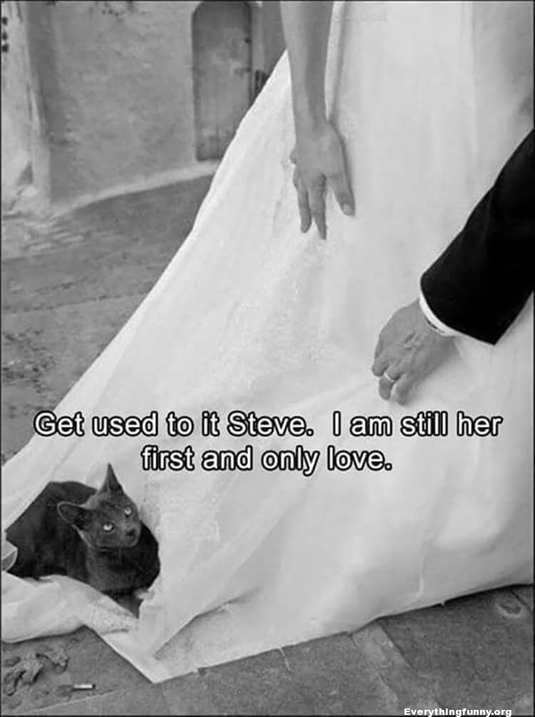 funny cat pictures, funny cat on wedding dress giving dirty look to groom