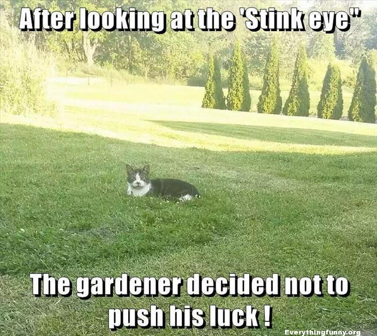 funny intimidating cat keeps guy from mowing lawn