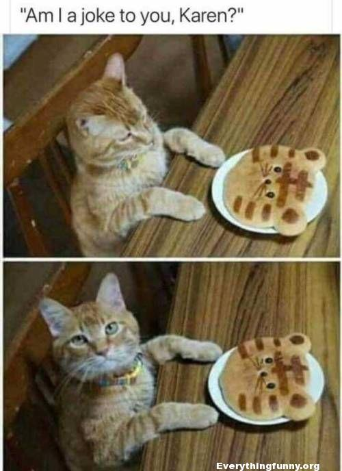 funny cat caption looking at cat shaped pancake am i a joke to you Karen