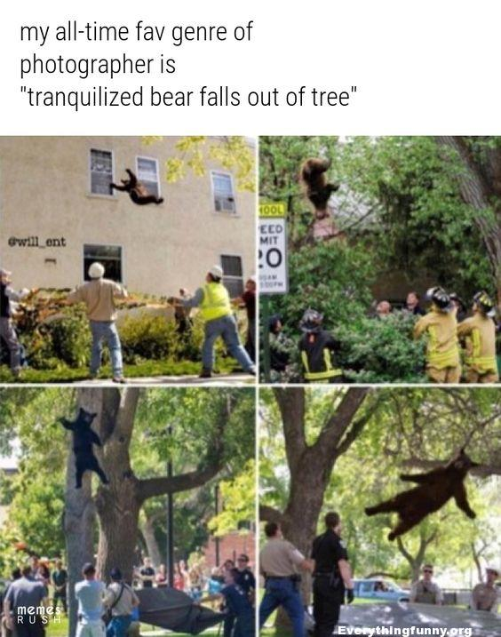funny photos of bears falling out of trees after being tranquilized