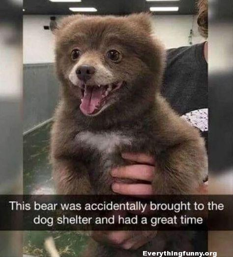 funny bear brought to do shelter by mistake but had a great time anyway