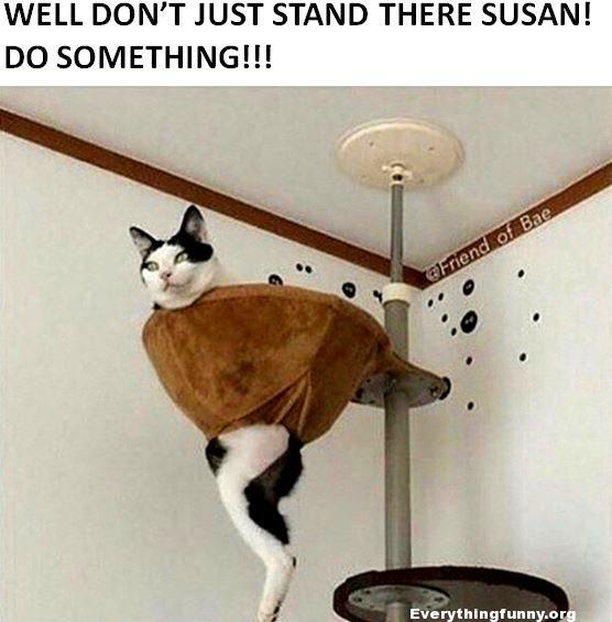 funny cat picture, funny fails, cat gets stuck in cat tree