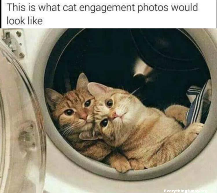 funny cats in dryer this is what cat engagement photos would look like