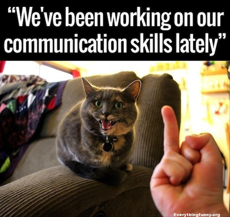 funny cat picture we've been working on our communication skills giving cat the finger
