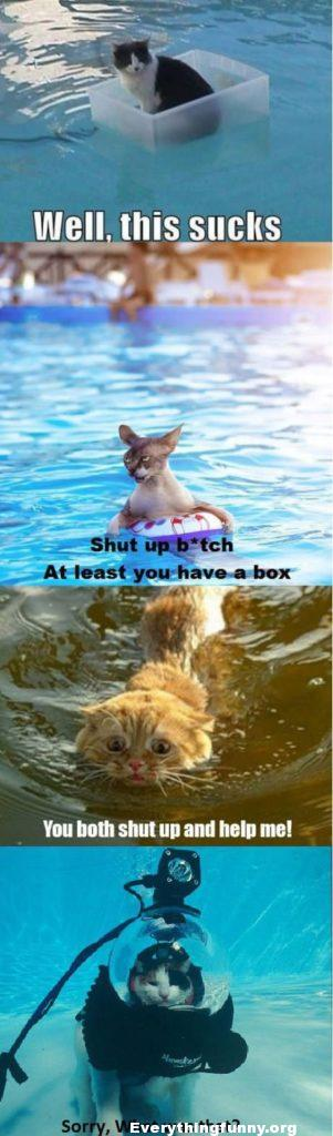 funny cats stuck in water pics caption cat memes