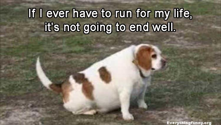 funny fat dog caption if i ever have to run for my life it's not going to end well