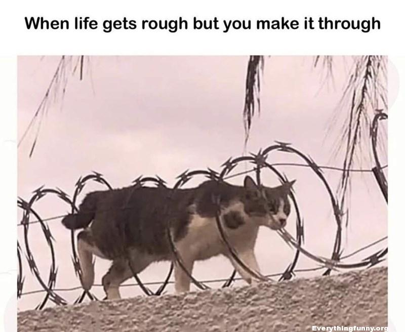 funny quote cat walking through barbed wire when life gets rough but you make it through