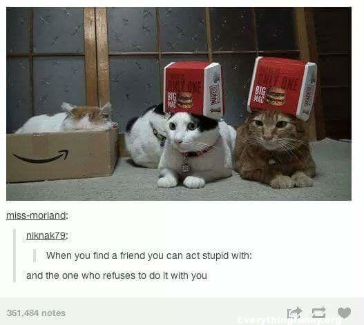 funny cats boxes on their head one without when you find a friend you can act stupid with and the one who refuses to do it