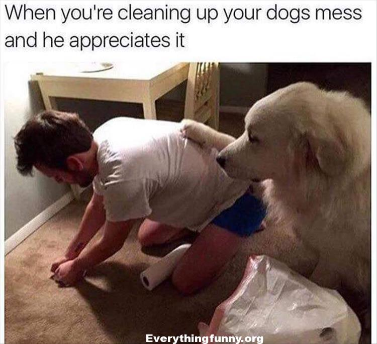funny dog captions when you're cleaning up your dogs mess and he appreciates it