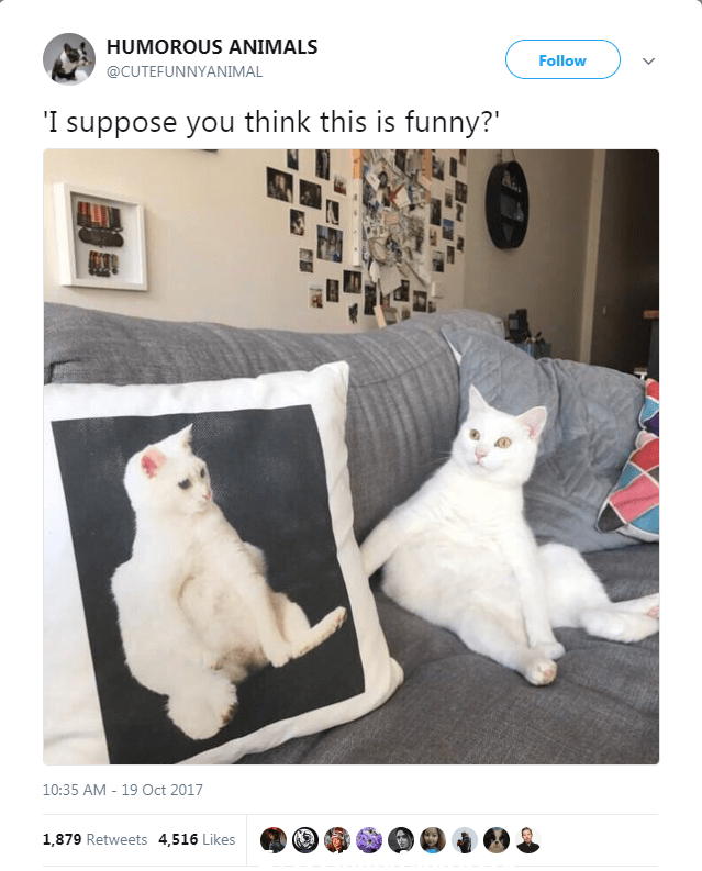 funny posts funny twitter cat pillow looks just like pet i suppose you think this is funny