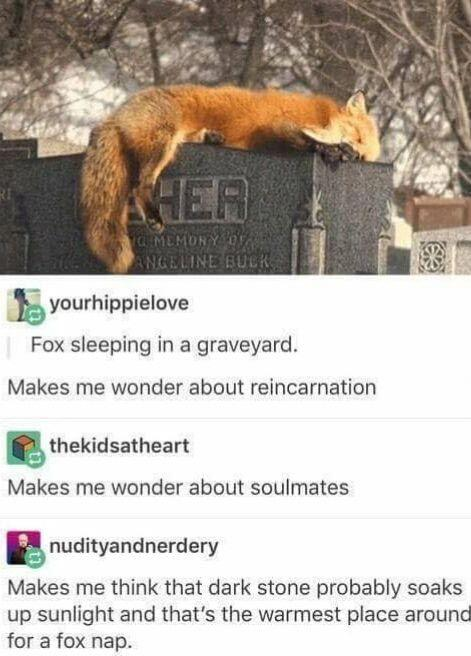 funny posts, funny comments, fox lying on top of tombstone,