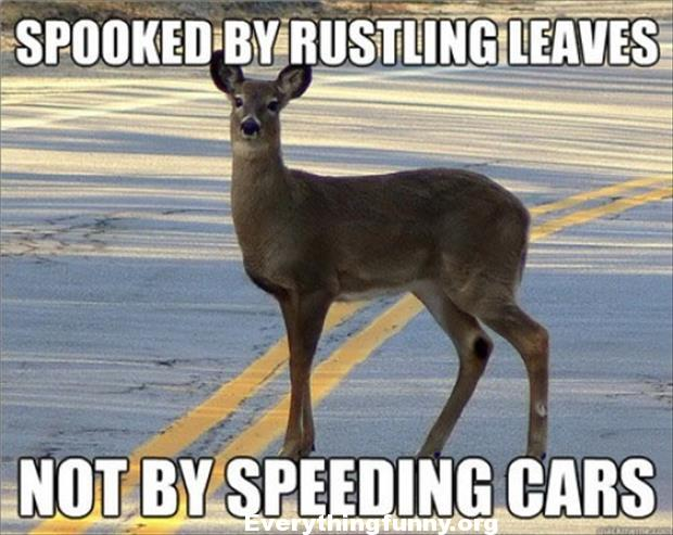 funny caption picture deer spooked by rustling leaves not by speeding cars