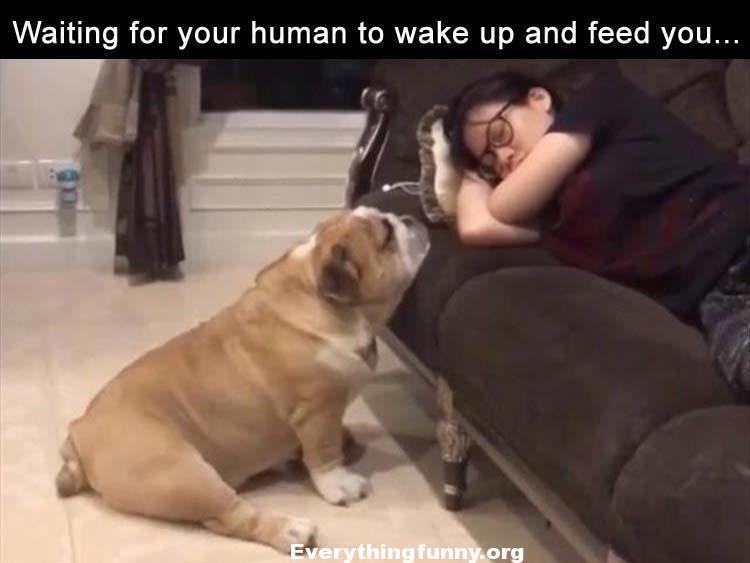funny dog caption picture waiting for your human to wake up and feed you