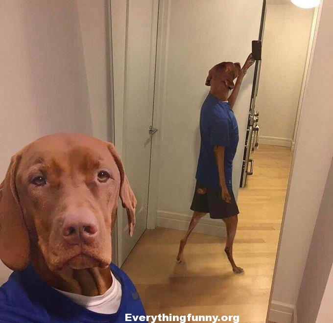 funny dog selfie, funny dog pictures, funny photoshop pictures,
