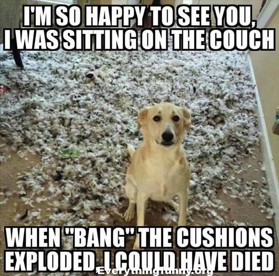 funny dog caption pic, i'm so happy to see you i was sitting on the couch when bang the cushions exploded i could have died