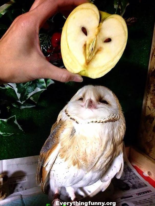 Funny Can't Unsee it photo - apple looks like owl