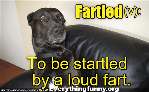 funny dog caption, funny new words, funny fartled, to be startled by a loud fart, funny sniglets,