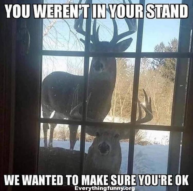 funny caption meme deer come to door you weren't in your stand we wanted to make sure you're OK