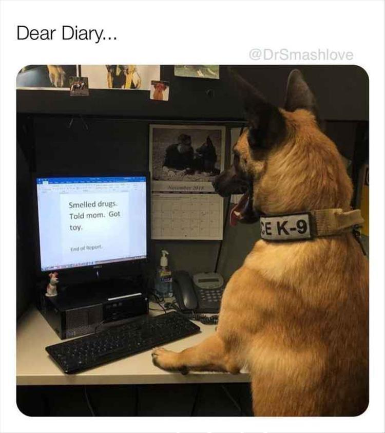 funny k-9 dog pictures dear diary smelled drugs told mom got toy